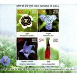 سونیزشیت گلهای وحشی - هند 2013