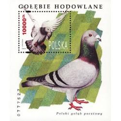 سونیرشیت کبوترهای دست آموز  - لهستان 1994