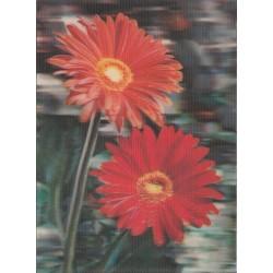 کارت پستال خارجی شماره 185 - سه بعدی - گل - چاپ زوریخ