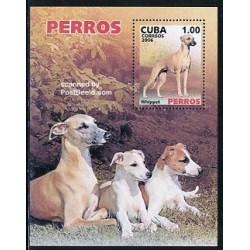 سونیرشیت سگها - کوبا 2006