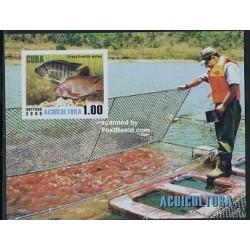 سونیرشیت  فرهنگ آب - ماهیها - کوبا 2008