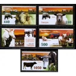 5 عدد تمبر حیوانات اهلی - بلاروس 2007