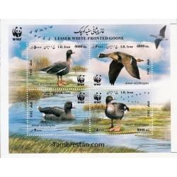 3389 - بلوک یادگاری غاز پیشانی سفید کوچک 1394 - WWF