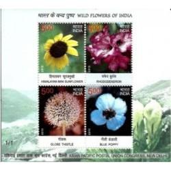 سونیزشیت گلهای وحشی - هندوستان 2013